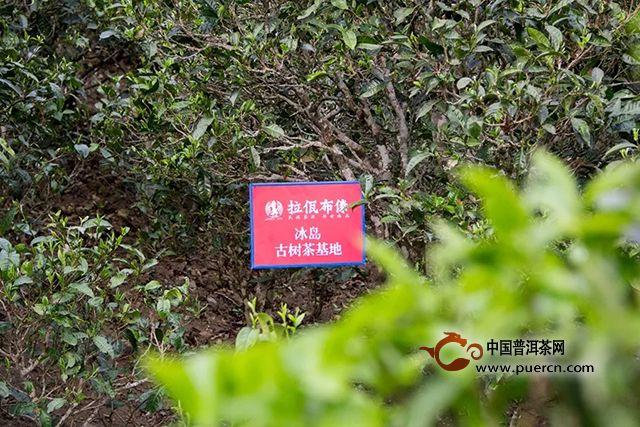 拉佤布傣:有了这份茶山地图,比别人抢先一步找到好茶