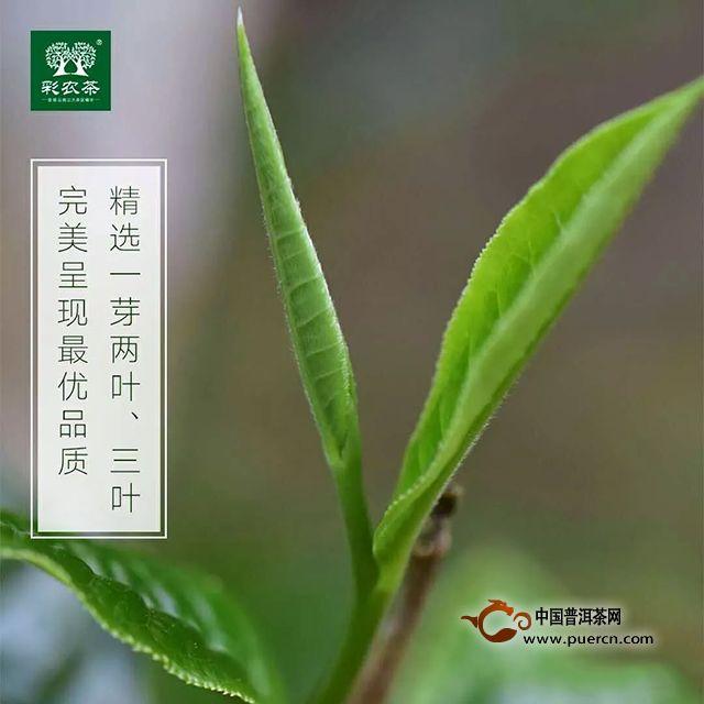 彩农茶|勐海小饼【2019春】开始优惠预订