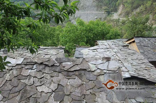 蒲门茶业丨国家级古茶树保护联盟成立,蒲门自有古茶园基地成为首批采样点