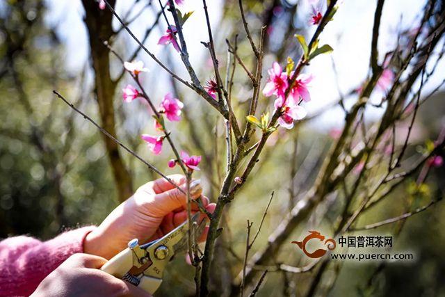 大益茶道院首堂野外插花课,她们将春天留在了身边