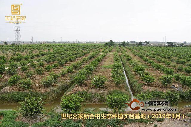 世纪茗家:种了两年的柑苗能长成啥样?一起到实验基地看看!