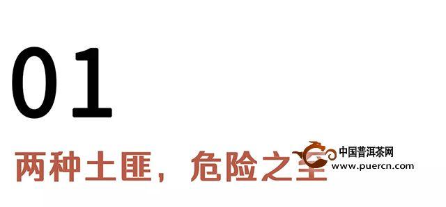洪普号:【春茶预售】两个土匪窝,不一样的匪气