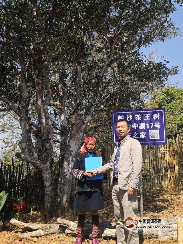 重磅喜讯!帕沙茶王树2019年春茶采摘权由勐海芒嘎拉茶厂夺得!