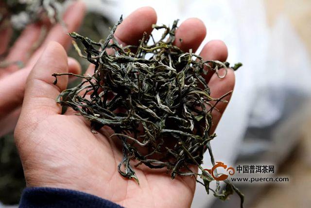 吉普号:昔归是临沧老班章?那些年被你误解的昔归茶