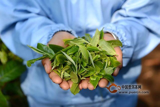 巅茶茶业:【3.15消费者权益保护日】你的健康·由我们来守护