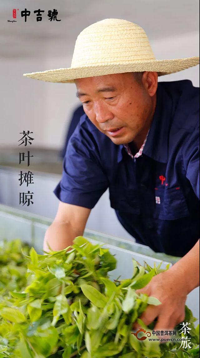 中吉号茶旅|春茶初发鲜嫩带水珠的古树茶芽喊你上山啦~