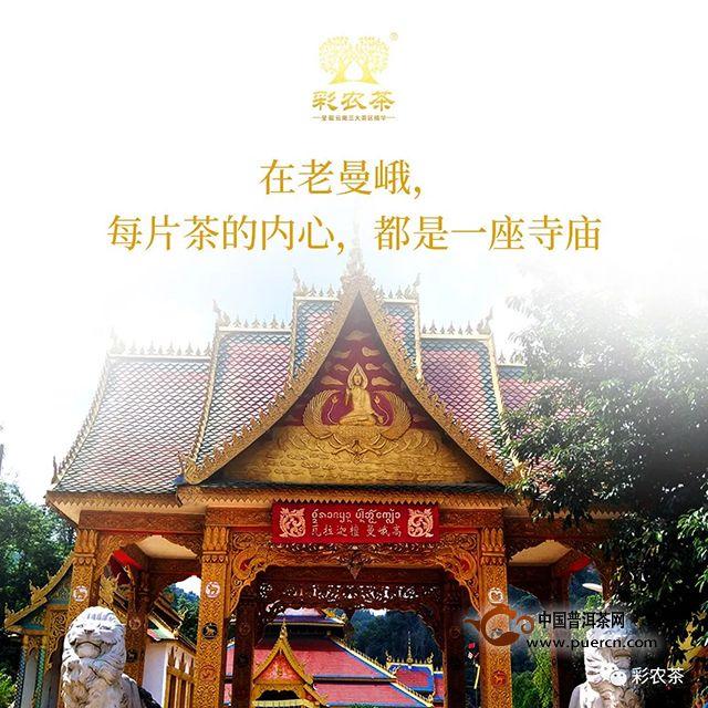 彩农茶|老曼峨2019春头采古树纯料青饼开始优惠预订