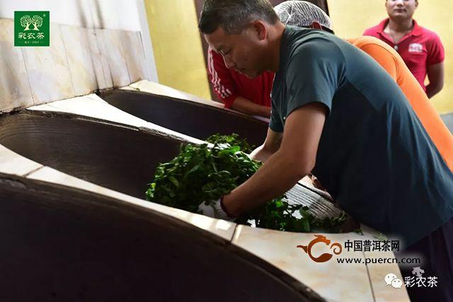 冰岛茶王|2019头春最大树开采,彩农茶专业铸就高端品牌价值