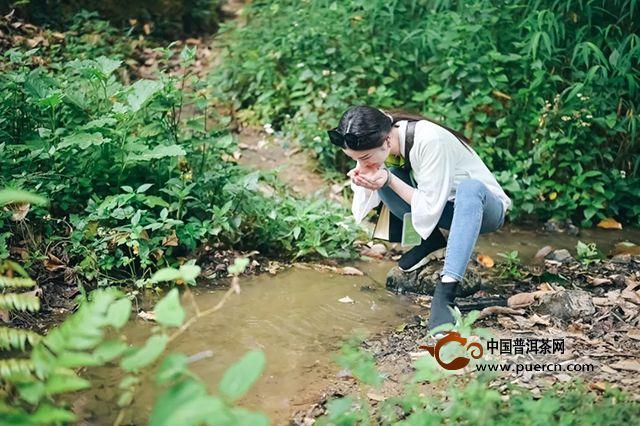致敬易武  复兴之光|2019岁月知味易武茶山行(二)
