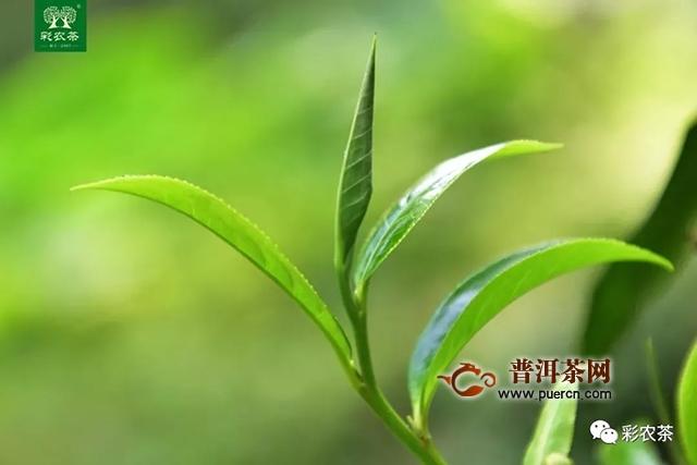 """彩农茶:""""古风""""国韵  小隐于野"""
