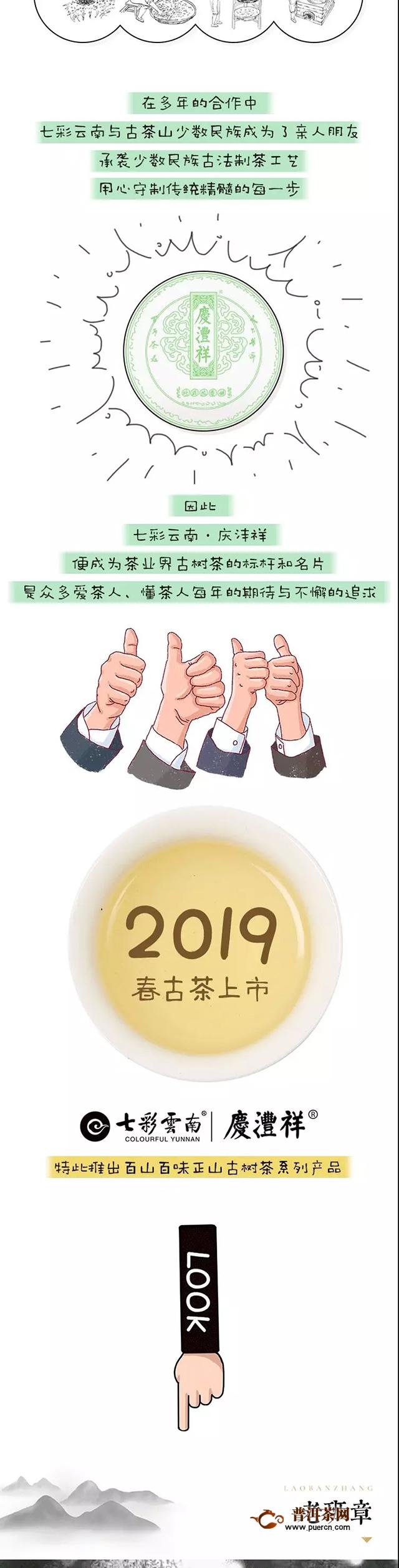 【揭秘】云南古树茶百山百味的生命密码!