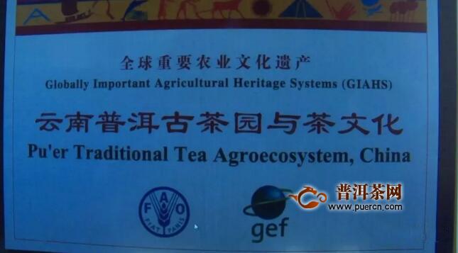 南京农业大学科研团队到困鹿山皇家古茶园开展文化遗产监测评估
