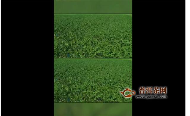 """江门市庆祝""""中国农民丰收节""""活动将在新会陈皮村盛大举行!"""