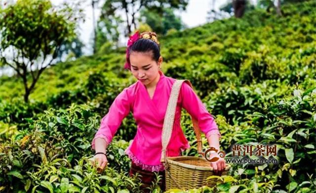 全中国茶人的节日——让世界爱上普洱茶·恋上勐海味!