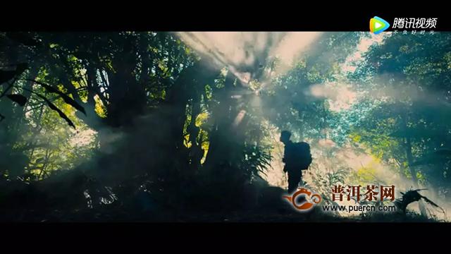最近,那棵树龄1700年的茶王树又火了!(陈升号与茶王树的故事)
