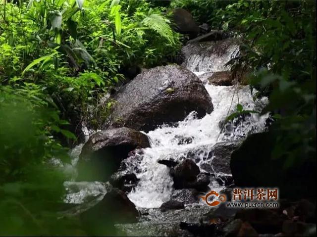 """吉普号茶山黑话竹梁子&刮风寨,哪座茶山更能代表""""原始森林的味道""""?"""
