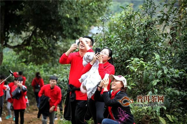"""回顾:2019年勐昌號""""春茶节"""""""