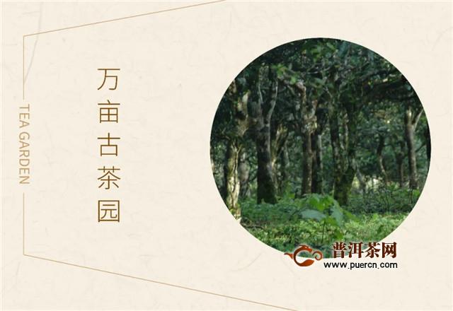 六大茶山直播预告:寻迹,秘境仙踪