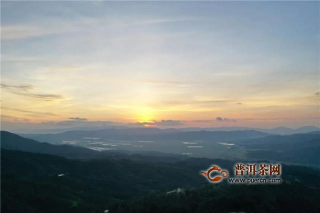 云南省茶园面积2019年全国第一,六大茶山贺开古茶园达16200多亩